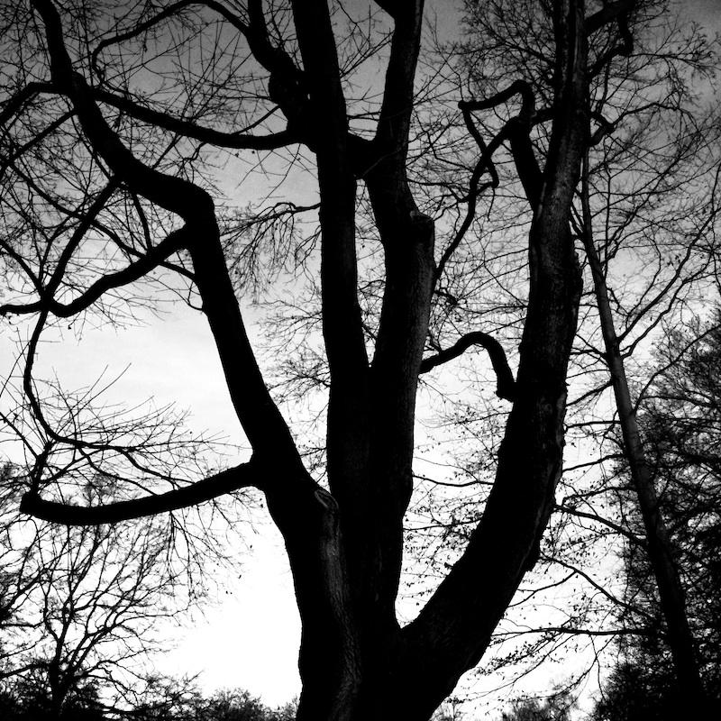 Baum_01.jpg