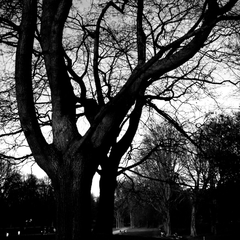 Baum_02.jpg