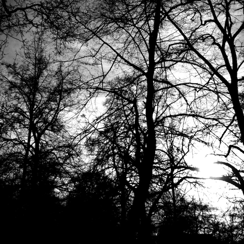 Baum_03.jpg