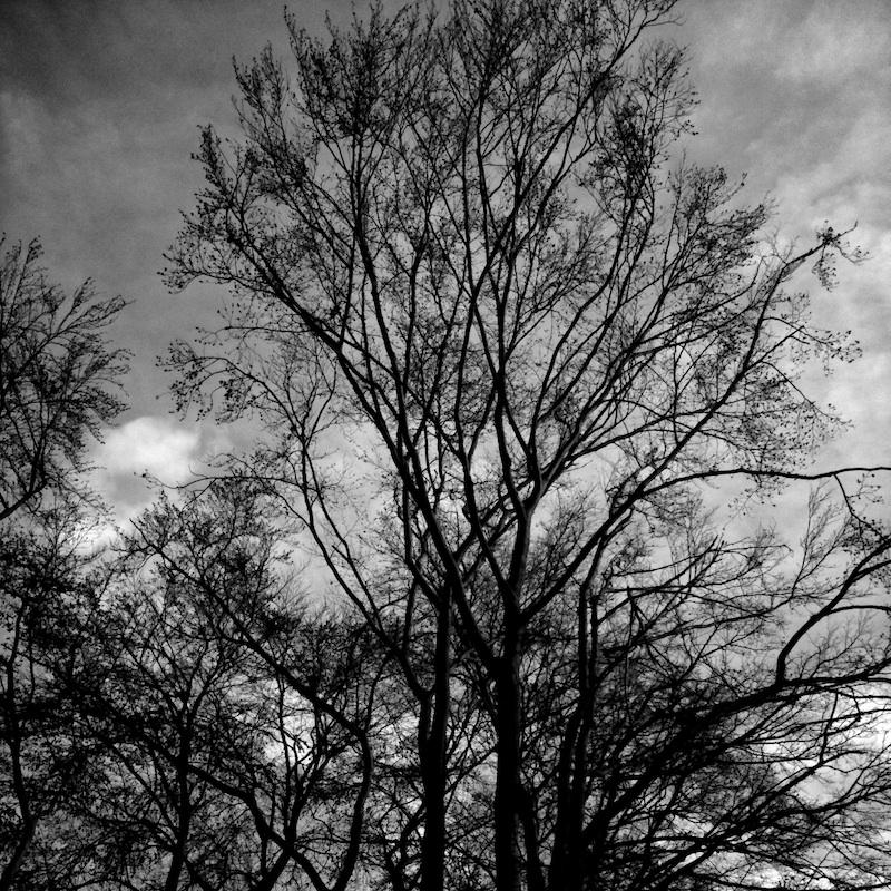 Baum_04.jpg