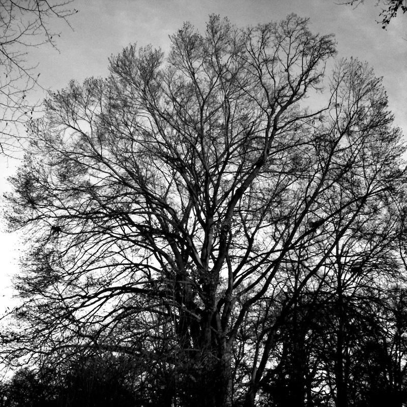 Baum_05.jpg
