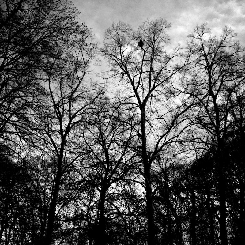 Baum_06.jpg