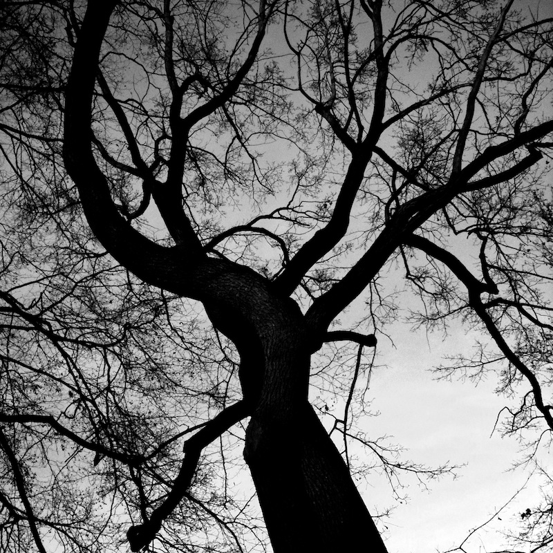 Baum_07.jpg