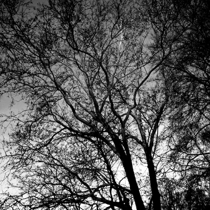 Baum_08.jpg