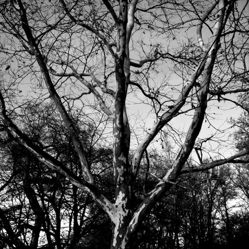 Baum_09.jpg