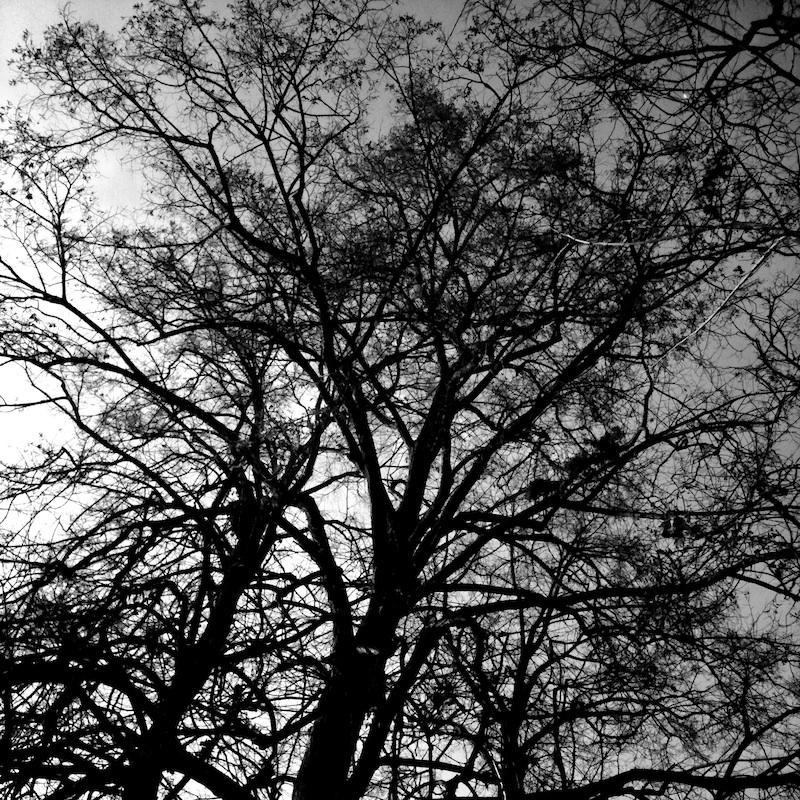 Baum_10.jpg