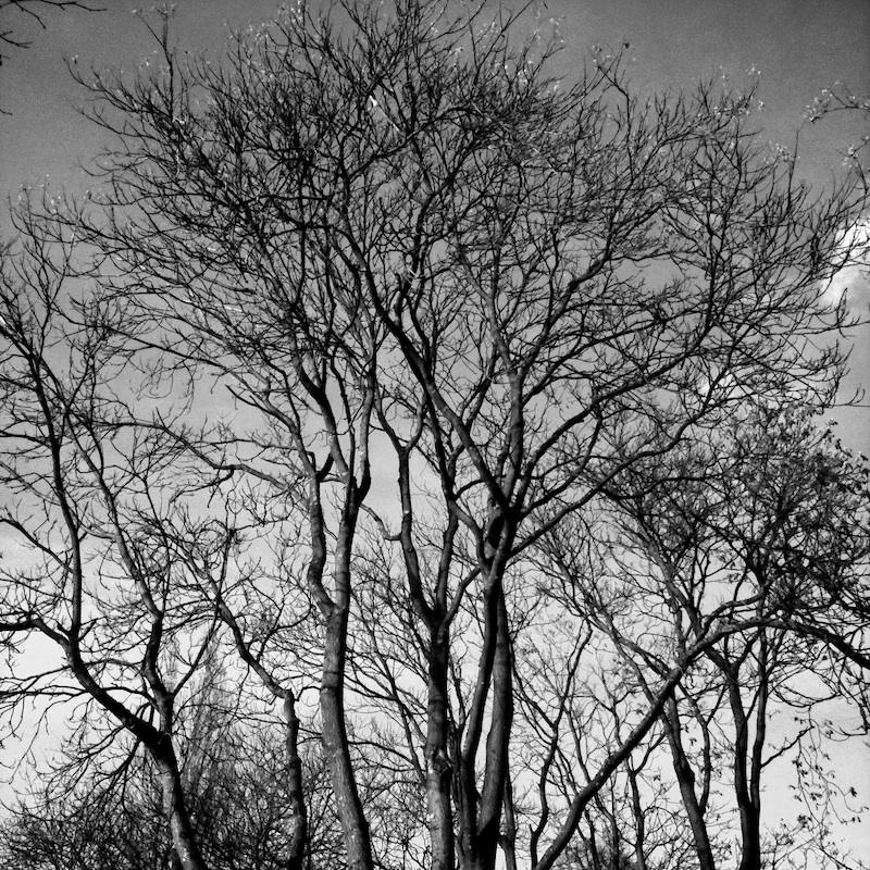 Baum_11.jpg