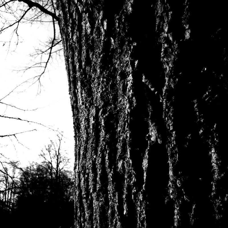 Baum_12.jpg