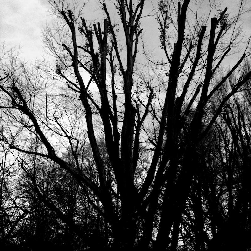 Baum_14.jpg
