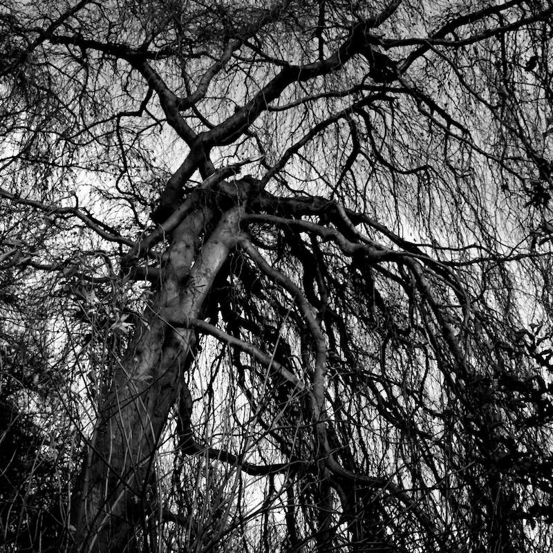 Baum_15.jpg