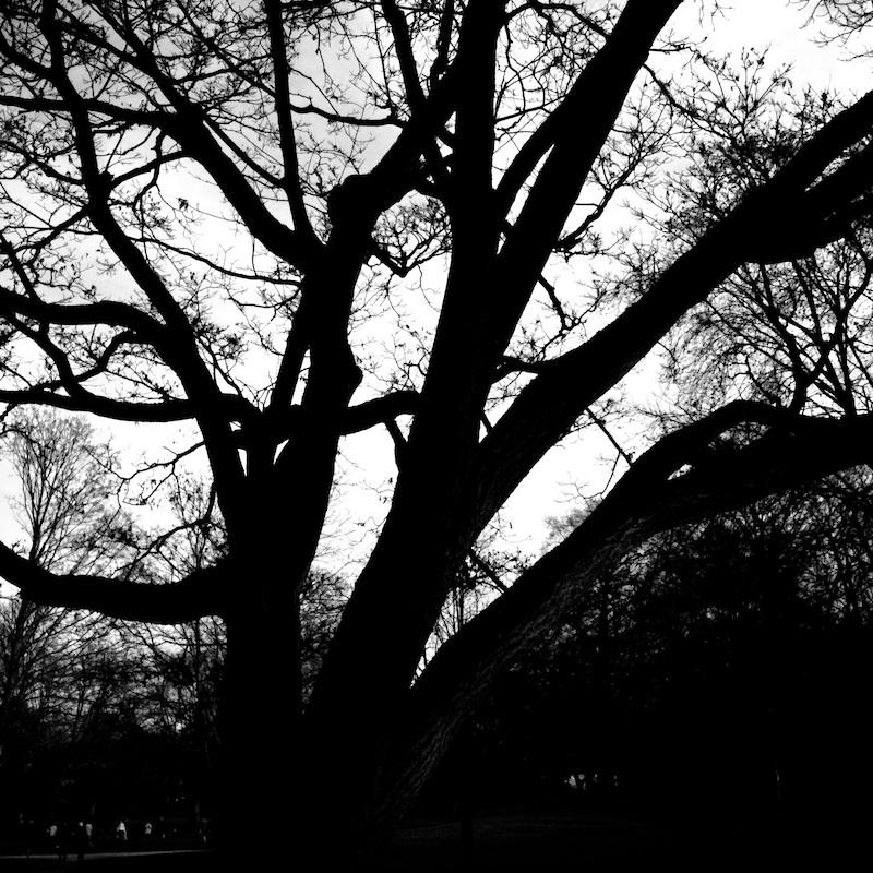 Baum_16.jpg