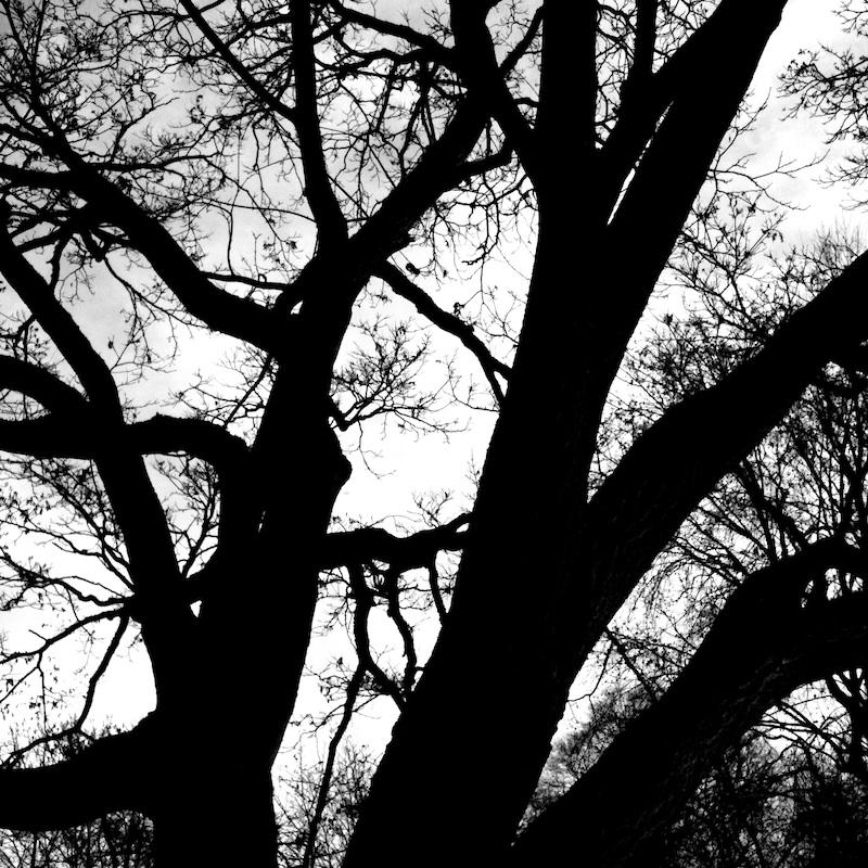 Baum_17.jpg