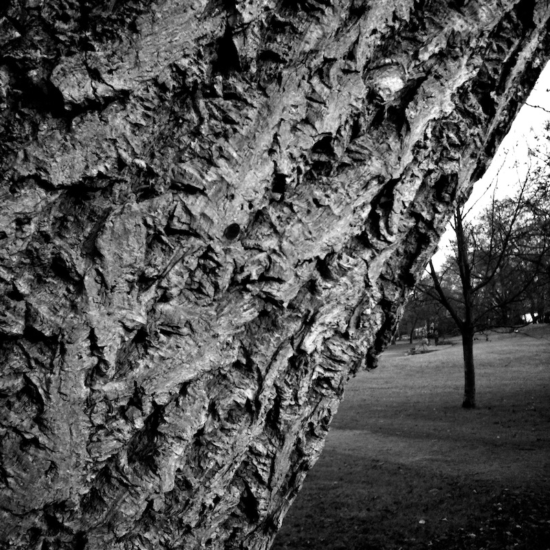 Baum_18.jpg