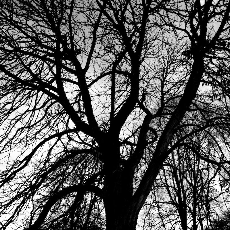 Baum_19.jpg