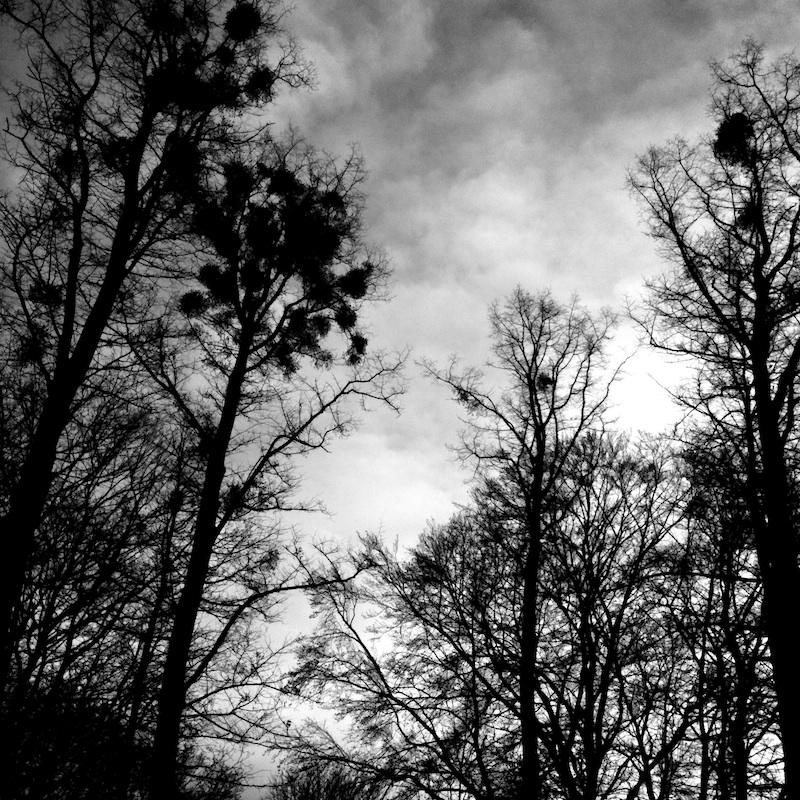 Baum_20.jpg